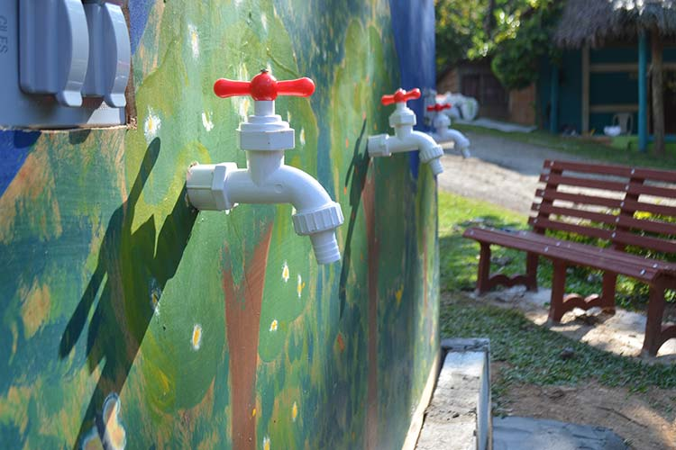 Arbol del Agua en Mapiripán Meta